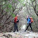 Macchia arborea alta più di due metri!!!!! Una naturale galleria ombrosa fatta dai rami di cespugli di erica!