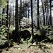 hübsche Waldpartien auf dem gemütlichen Rundweg ums Gibelhorn