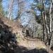 hübcher Wegabschnitt oberhalb der Gibelflue, den senkrechten Wänden ob des Kapuzinerwaldes