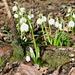 """dekorative Frühlings-Knotenblumen - oder """"Flugetsche"""""""