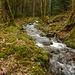 """Zirka 2,5km hinter Wisches im Tal vom Netzenbach beginnt die eigentliche Wanderung. Man spaziert auf einem Forstweg dem Bächlein """"Le Petit Wisches Rau"""" durch ursprünglichen Wald entlang."""