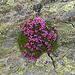 Blumenpracht am Hüttenweg. Es gibt viel zu entdecken.