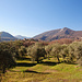 Sieht nach Toscana aus, bald kommt der Frühling, bestimmt