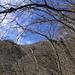Auch der Blick hinauf ist durch die blätterlosen Wälder gewährleistet...