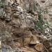 An mehreren Stellen muss man kurze Felsaufschwünge auf Klammern überwinden.