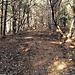 Il taglio che dal roccolo sale direttamente al ripetitore presso Pian Valdes, in questo tratto i cinghiali hanno sconvolto il terreno.