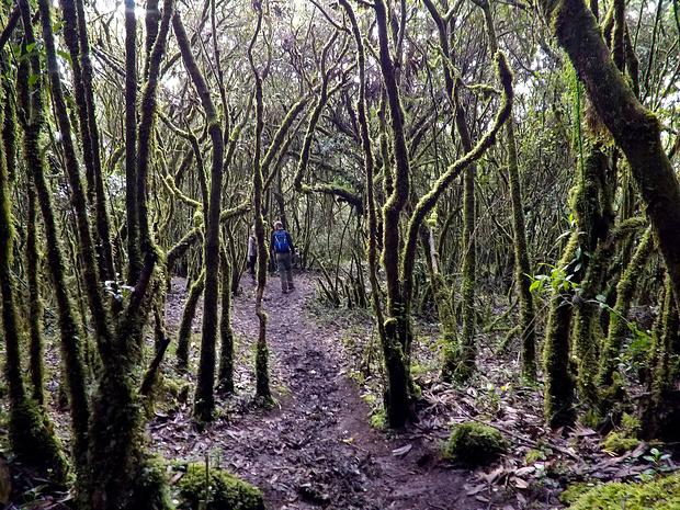 Wieder im Regenwald