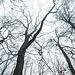Die Bäume verschwinden im Nebel