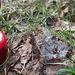 Bei einem alten Torfabbaugebiet (Übergangsmoor Niederlamitz) quoll Eis aus dem Boden.