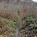 dies ist der Wanderweg steil nach oben, leider nicht mehr passierbar, da die Mountainbiker schlimme Spuren hinterlassen haben.
