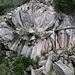 """Die Lavarosette """"Piedra de la Rosa"""" besteht aus radial angeordneten Basaltsäulen. Die Ausrichtung der Lavasäulen verläuft immer senkrecht zur Abkühlungsfläche, es handelt sich also um einen Lavatunnel der auskühlte als kein Lavalfluss mehr hinen nachkam und der Tunnel auch nicht lerrlaufen konnte."""