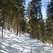 Nach dem Ende des unteren Teils der ehemaligen Skipiste gehe ich durch den Wald statt über den breiten Forstweg