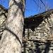 Il tronco dell'acero che recava il conforto dell'ombra nella calura dell'estate
