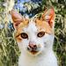 Katze in Matera