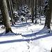 Auf und ab durch den Wald