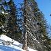 durchlöcherter, abgestorbener Baum beim Aufstieg