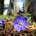 Einblick in wunderschöne Blumen in Bodennähe