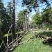 Der Gipfel des Cimonic liegt unscheinbar im Wald.