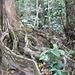 Angeblich befindet sich auf der Osa Halbinsel, von der der Corcovado Nationalpark ein Teil ist, der grösste zusammenhängende Urwald in Amerika nördlich des Amazonas.