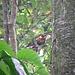 Verstecken hilft nicht, wenn man so bunt ist - wir entdecken im Laub einen Ara.