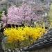 Tegna - der Frühling lässt grüssen