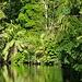 Wir verlassen den breiten Kanal und biegen auf einen kleinen Fluss/Kanal mit schwarzem Wasser und tollem Uferdickicht ein