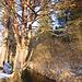 Idylle mit Baum und Grundwasserbach