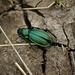 dem Käfer die letzte Ehre erwiesen