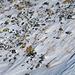 Abgeblasene Stelle unterhalb der Chumminilicke. Hier trage ich die Ski kurz.