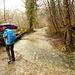 der Wasserstrom über den Wanderweg ist recht breit, da müssen wir über den linken Baumstamm ausweichen