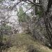beim Aufstieg durch die beiden Felstürmchen zum Chellenchöpfli