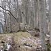 Schattberg-Grat; Trittspuren mit Neuschnee