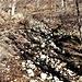 Il sentiero è invaso dall'acqua dei torrenti che hanno abbandonato il loro alveo.