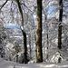 herrliches Winterwaldgratwandern