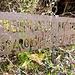 Naturdenkmal - freiwillig !!!