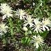 Etwas Natur gibts auch hier.<br /><br />Kennt jemand den Namen dieser Blumen?