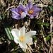 Im Tal hält der Frühling Einzug