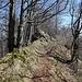 Auf dem Grat des Bilsteinberges