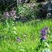 Frühling am Rilkeweg