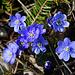 Der Frühling naht, zumindest südseitig auf 900 m Seehöhe