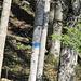 Die erste blaue Markierung, ca. 10m weit im Wald am höchsten Punkt des Waldsträsschens bei Schwendi