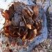 Kunstwerke der Natur: Ein Laubnestlein