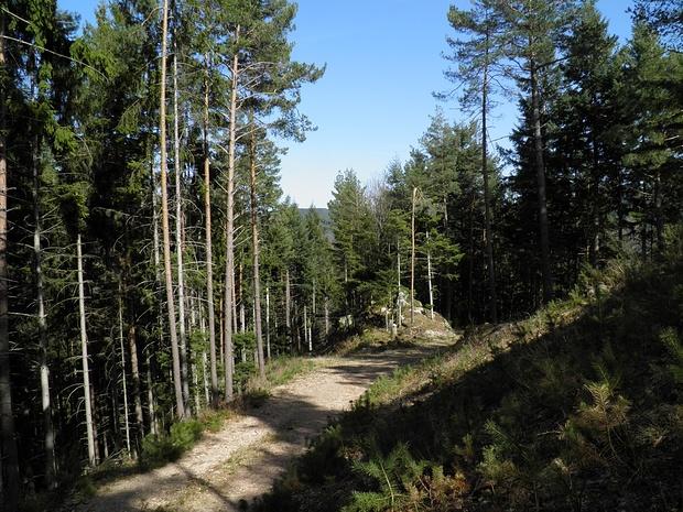 auf Forstwegen meist durch Wald zum Uhu-Felsen