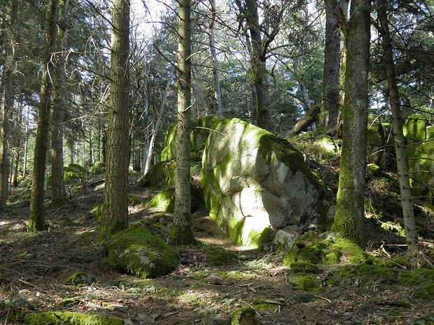 romantische Felsenlandschaft im Wald