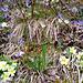 magia della primavera