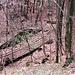 Nel bosco si vedono i binari che salivano al vecchio bacino.