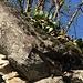 I cactus di Pontemaglio...