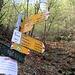 Bivio Q630 L' indicazione di PERICOLO si riferisce ad un ingente taglio alberi che invade completamente il sentiero