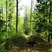Im Abstieg durch den Wald nach Welschenrohr.