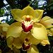 Blüte um Blüte